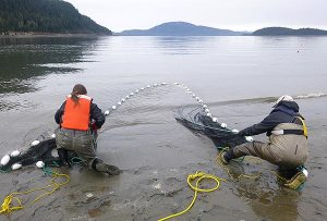 Two researchers at waters edge pulling in seine net