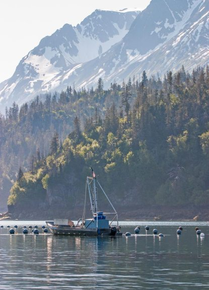 an oyster farming boat among buoys in Kachemak Bay Alaska, with trees and snowy mountains behind