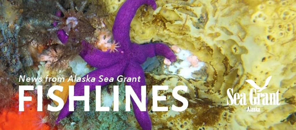 Fishlines spring 2020 banner