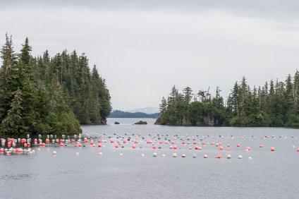 oyster farm buoys in a cove