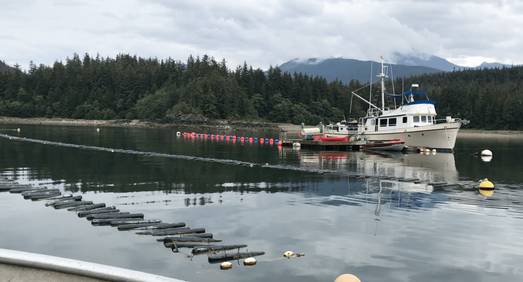Boat, buoys and floats at a mariculture farm