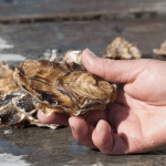 Hand holding an oyster with ocean in background