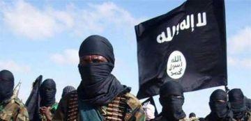 صورة المقاتلون الأجانب مع داعش.. ما مصير 40 ألف منهم اليوم بعد انهيار التنظيم؟