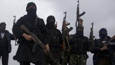 صورة الإرهاب حُمَّى المُسْتَنقَعات