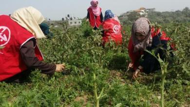 صورة الزراعة جبهة اليوم