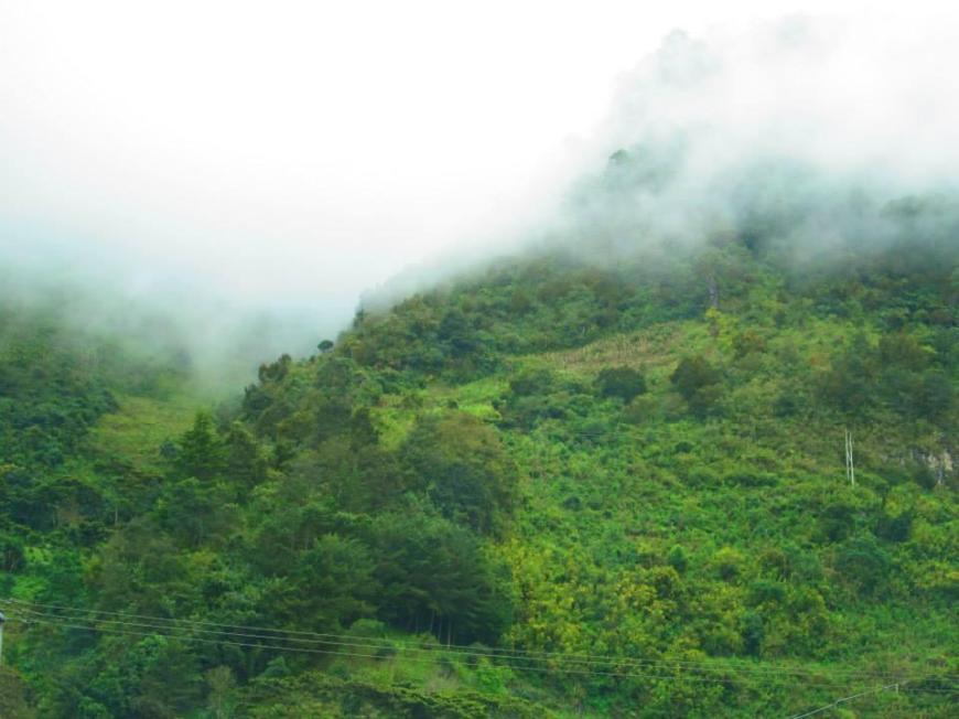 Vista de los Altos de Chiapas con neblina