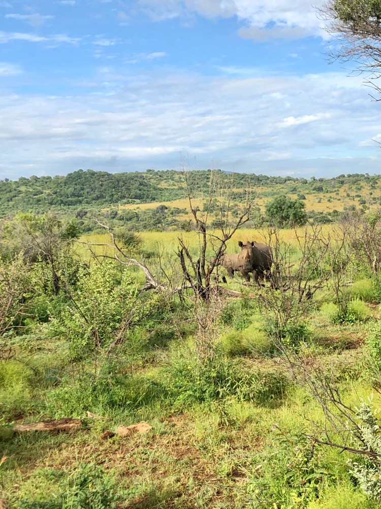 Rhino at Pilanesberg National Park
