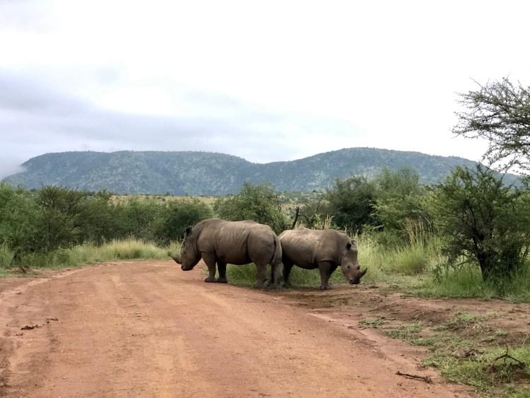 Rhino in Pilanesberg National Park