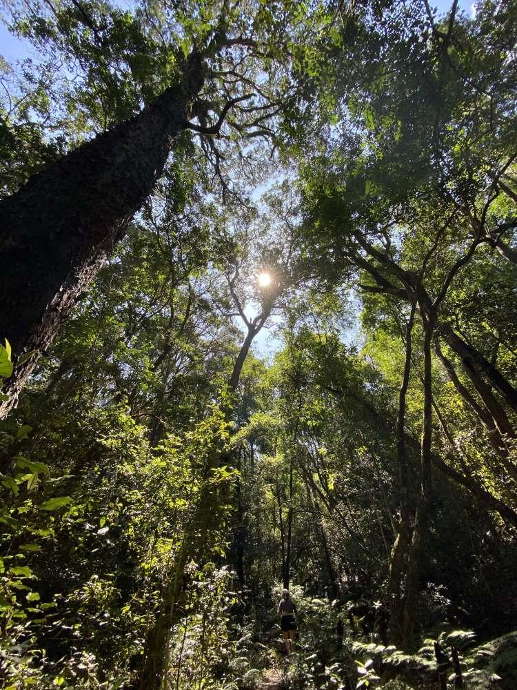 Tsitsikamma Canopy