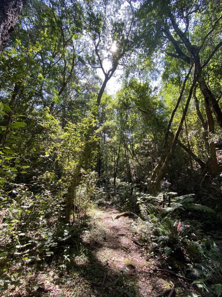 Tsitsikamma Canopy (Two)