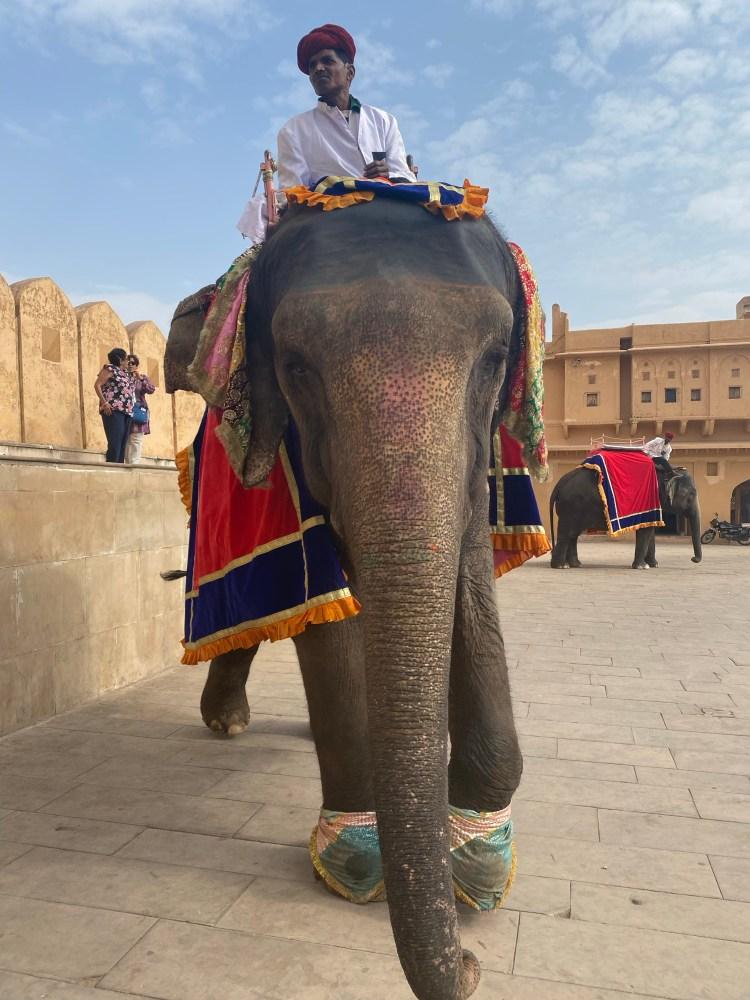 Elephant at Jaipur Palace