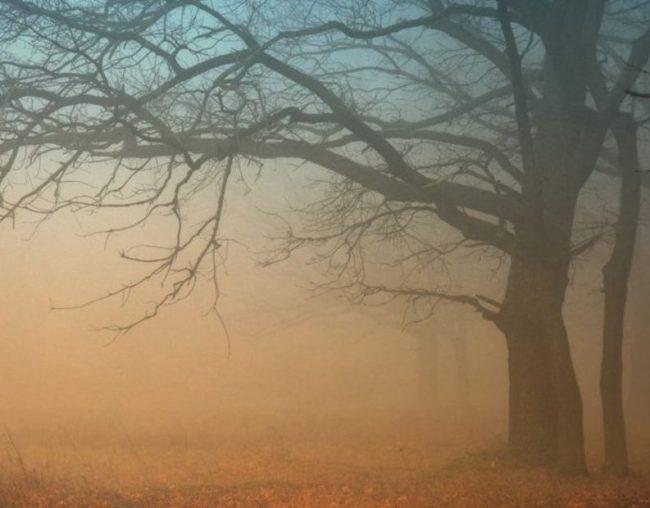 toamna ceata