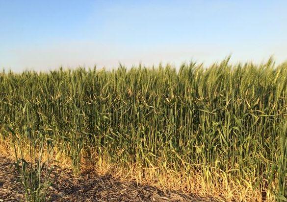 Los pequeños agricultores podrán recibir de un modo simplificado la PAC