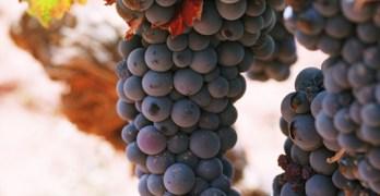 Biodiversidad para enfrentarse al cambio climático: apostar por la vida en la viña