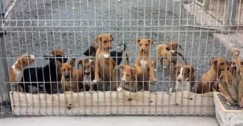 Se retrasa hasta la primavera la aprobación de las leyes de bienestar animal y de caza