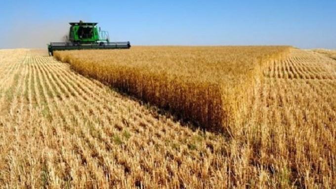 Récord en la cosecha de cereales con 24,11 millones de toneladas en todo el país y 4,13 en Castilla-La Mancha