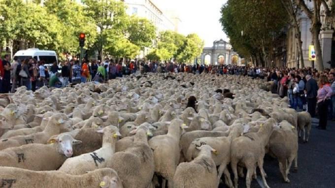 Stop Macrogranjas Castilla-La Mancha dirá 'No a la ganadería intensiva' en la Fiesta de la Trashumancia