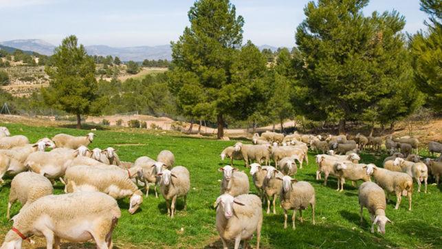 Cantero de Letur, pioneros en producción ecológica de lácteos que ya llegan a toda Europa