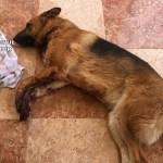 La Guardia Civil detiene a dos personas que extorsionaron a un joven causando heridas a su perro en Caudete