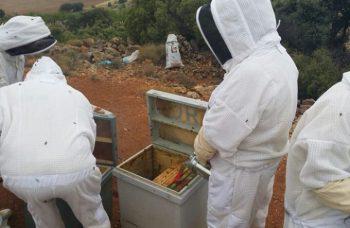 curso apicultura 2