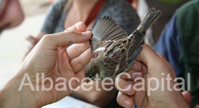 aves (4)