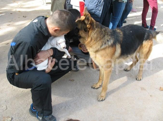 feria adopciones 6 (2)