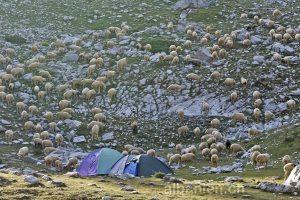 Albanische Alpen: Camping
