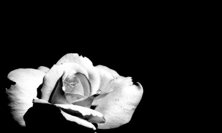 Poem A Day – Ed Rinaldi – the ghost of a rose