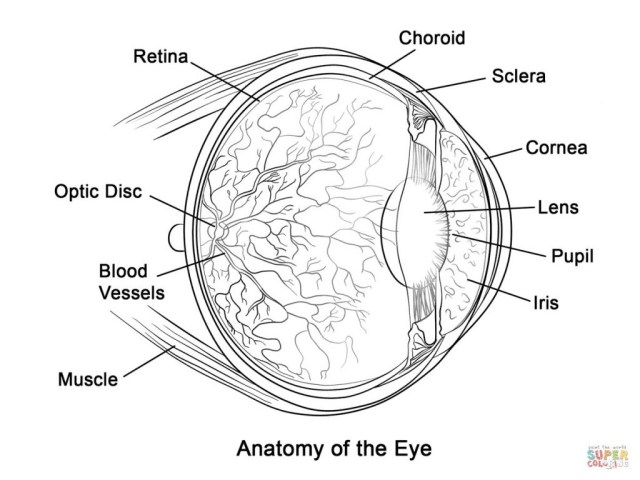 Anatomy Coloring Pages Coloring Page Human Eye Anatomy Coloring Page Free Printable Pages