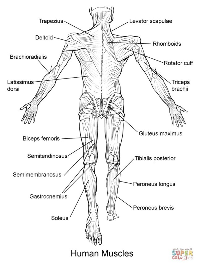 Anatomy Coloring Pages Free Anatomy Coloring Pages 18 Printable Human 0 Futurama