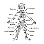 Anatomy Coloring Pages Pages Seomybrandcomrhseomybrandcom Page Cool Rhseomybrandcom Anatomy