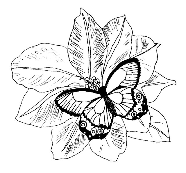 Flower Adult Coloring Pages Free Butterfly Mandala Coloring Pages Unique Adult Coloring Pages
