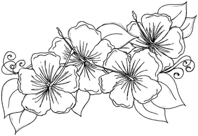 Flower Adult Coloring Pages Marvelous Printable Adult Coloring Pages Flowers With Christmas Best