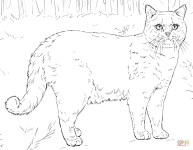 Free Cat Coloring Pages Cats Coloring Pages Free Coloring Pages