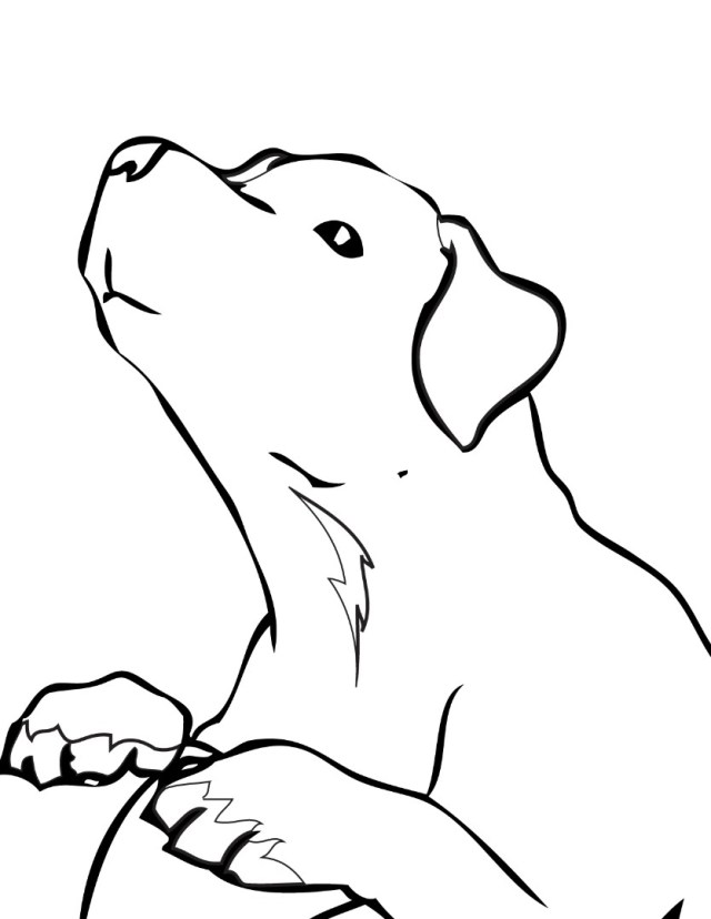 Golden Retriever Coloring Page Golden Retriever Coloring Pages To Download And Print For Free