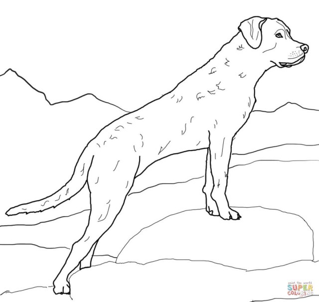 Golden Retriever Coloring Page Golden Retriever Puppy Coloring Pages At Getdrawings Free For