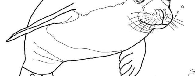 Seal Coloring Pages Seals Coloring Pages Free Coloring Pages
