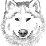 Wolf Coloring Pages For Adults Coloring Pages Printable For Kids Collector Wolf Head Mask Free