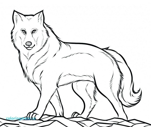 Wolf Coloring Pages For Adults Realistic Wolf Coloring Pages Page Wolves For Adults Luxury On
