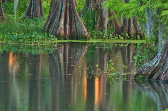 Photo of Cypress Swamps