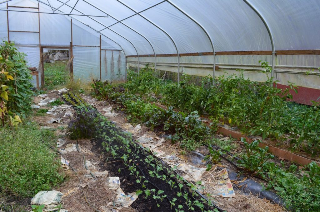 organic gardening North Carolina