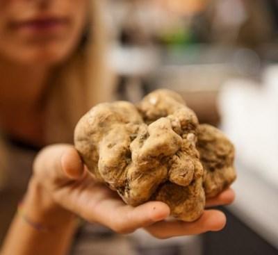 Truffle in hand