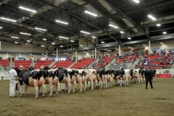 2016 National Holstein Convention- Just Majestic