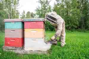 beekeeper tending to hives