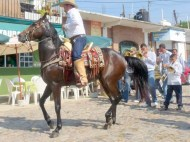 Horse and rider dancing to the music
