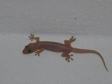 Our resident Gecko at Casa Ana Ruth