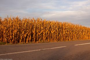 Corn on fire