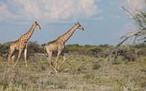 Namibia_1-09