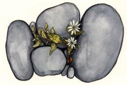 Esopus River Flowers