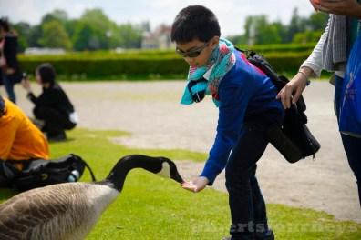 feeding the friendly goose